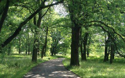 Corso aggiornamento Arboricoltura