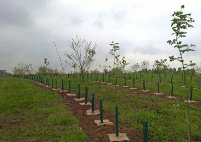 01-Riforestazione