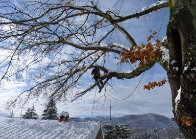 Quercia spezzata da neve